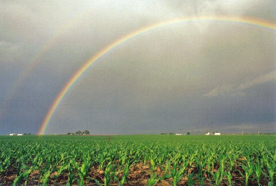RAINBOW OVER FIELD